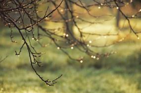 Pielęgnacja ogrodów, drzew i krzewów